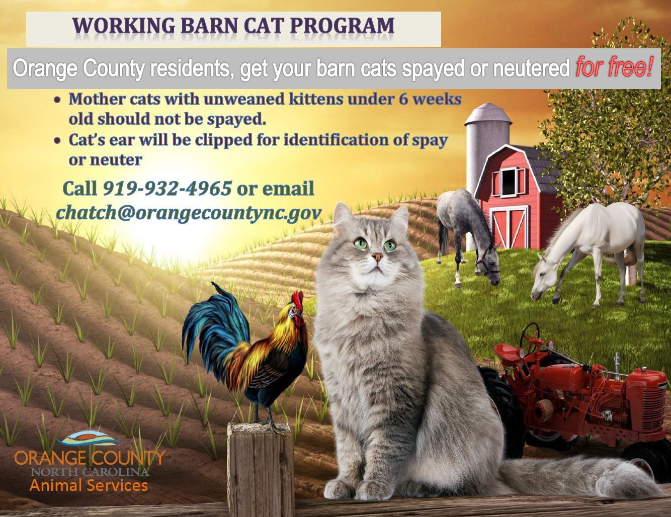 Working Barn Cat Program