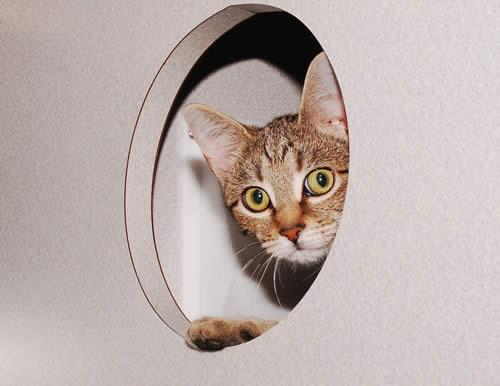 Cat Peeking Through Hole