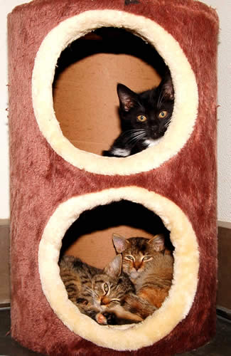 Three Cats in a Cat Tree