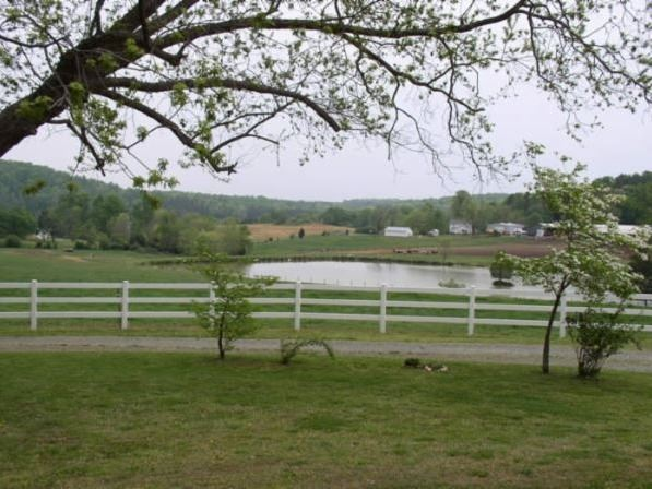 White fence through grassy area