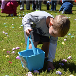 Boy picking up eggs at Egg Hunt
