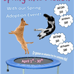 SpringAdoption2019_forWeb